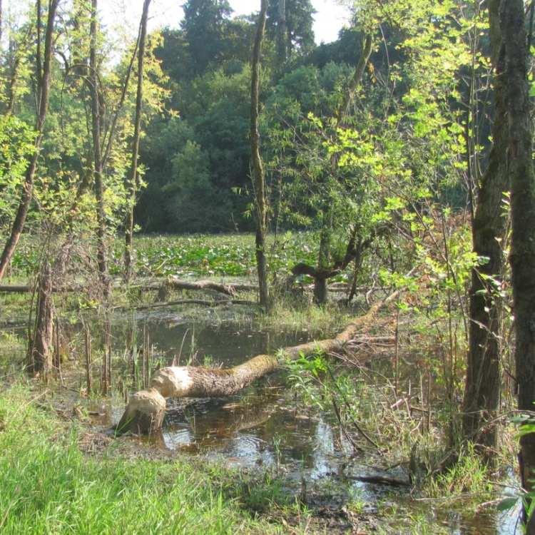 dalton lake nature preserve st. helens columbia city bike trail oregon