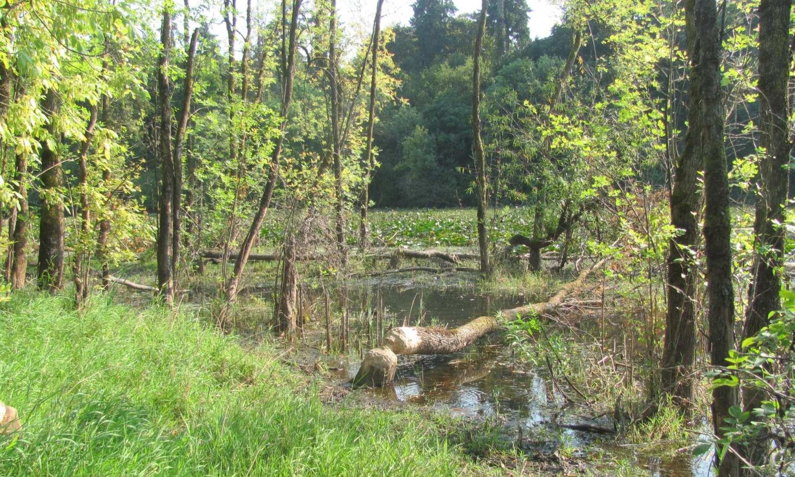 Dalton Lake st. helens oregon columbia county