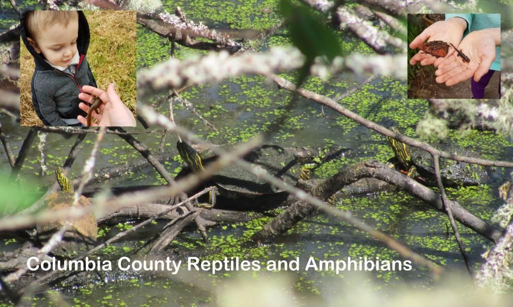 Columbia County Reptiles and Amphibians oregon