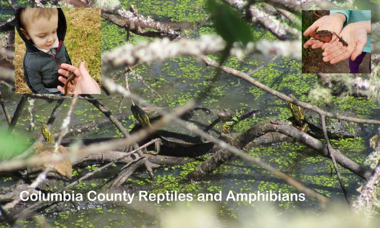 Columbia County Reptiles and Amphibians oregon