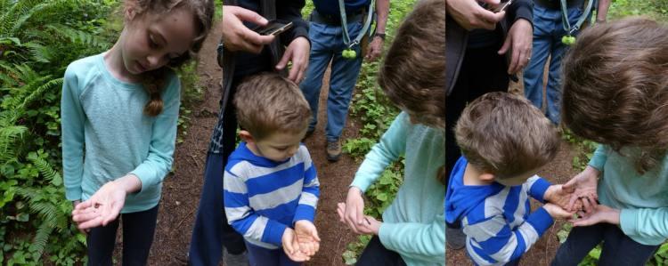 salamander at gnat creek trail oregon
