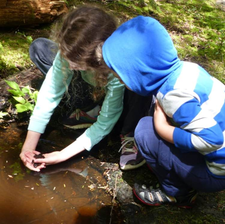 gnat creek oregon hatchery trail