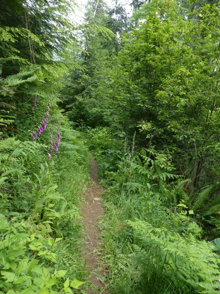 gnat creek trail oregon
