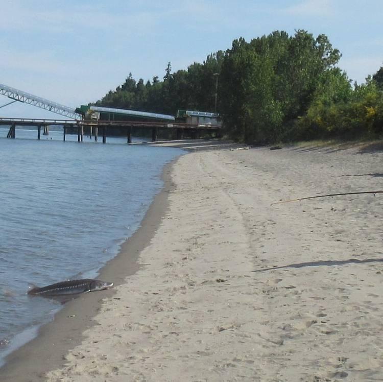 trestle beach st. helens oregon
