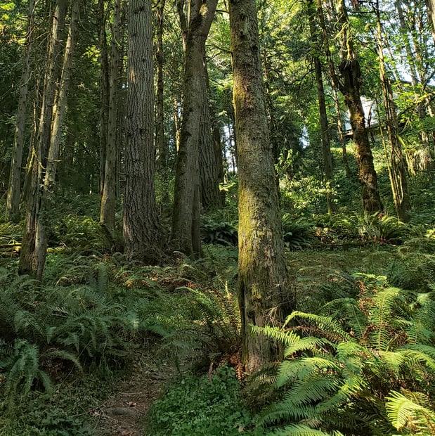 fox creek trail rainier oregon columbia county