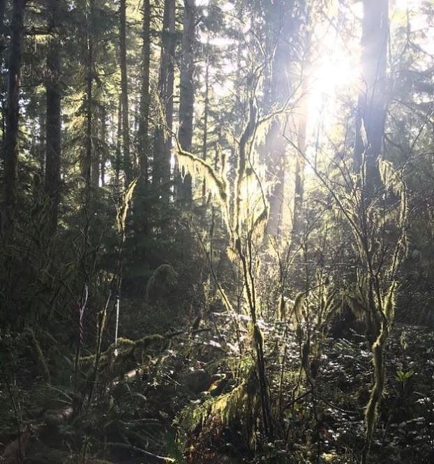 Gnat Creek trail clatskanie oregon