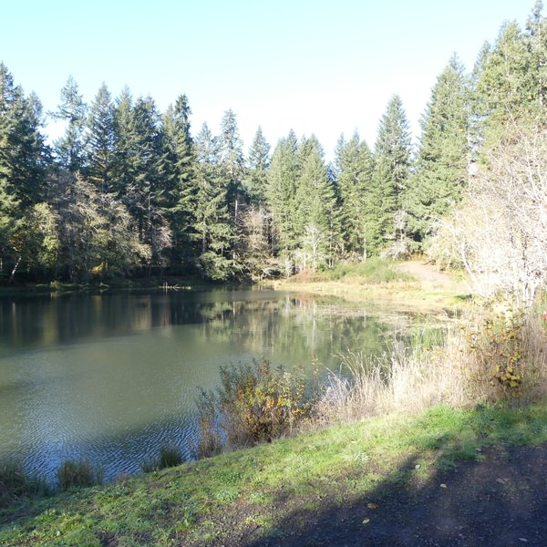 Salmonberry Reservoir St. Helens Tree Farm Columbia County Oregon