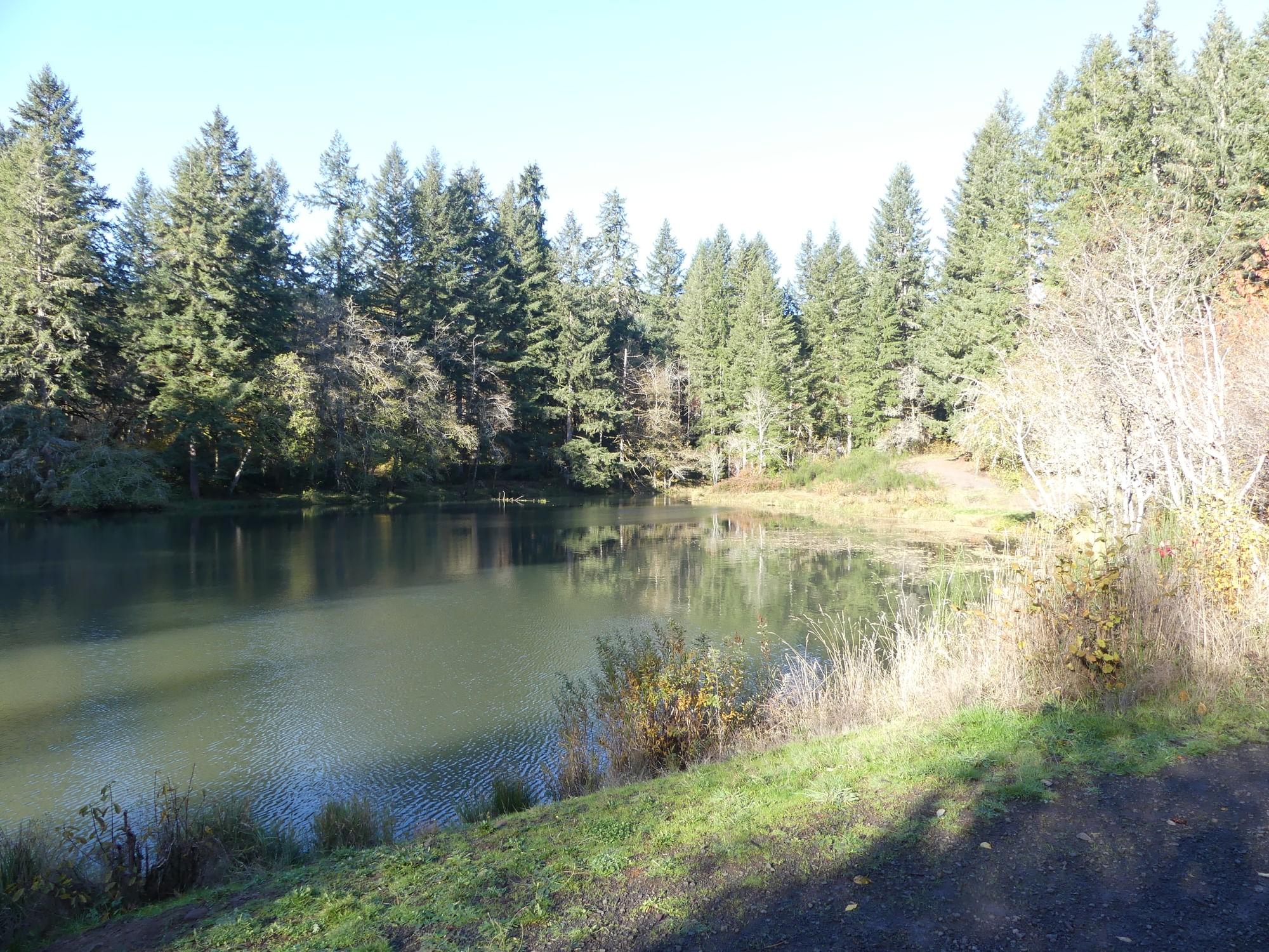 salmonberry reservoir st. helens tree farm columbia county