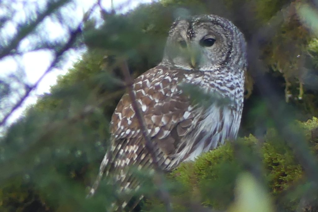 Barred Owl Banks-Vernonia Trail linear park columbia county