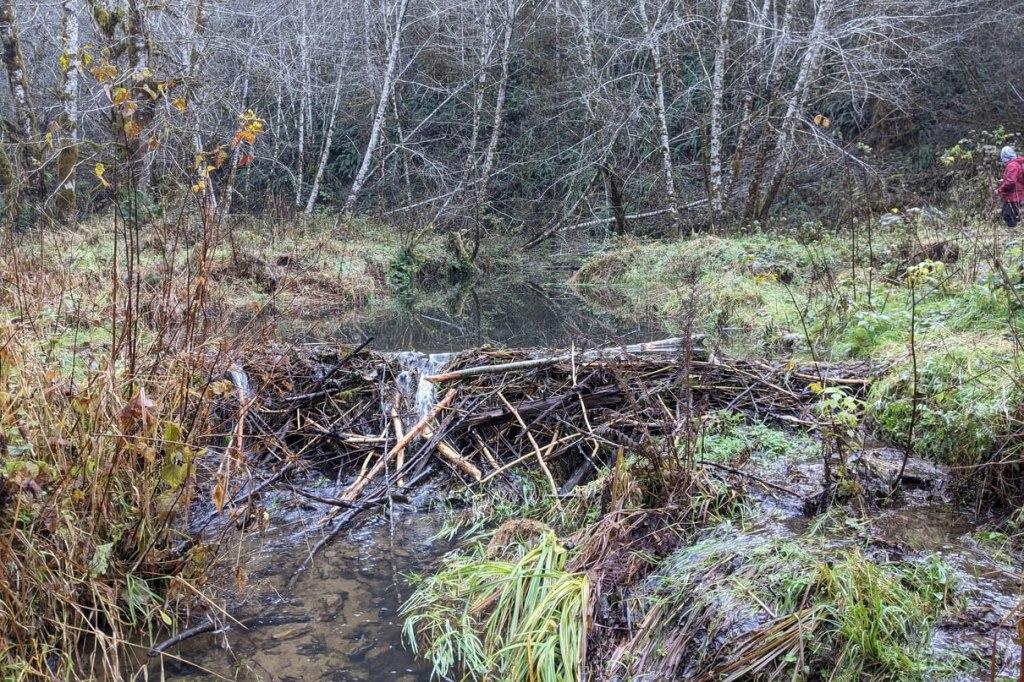 beaver dams columbia county oregon