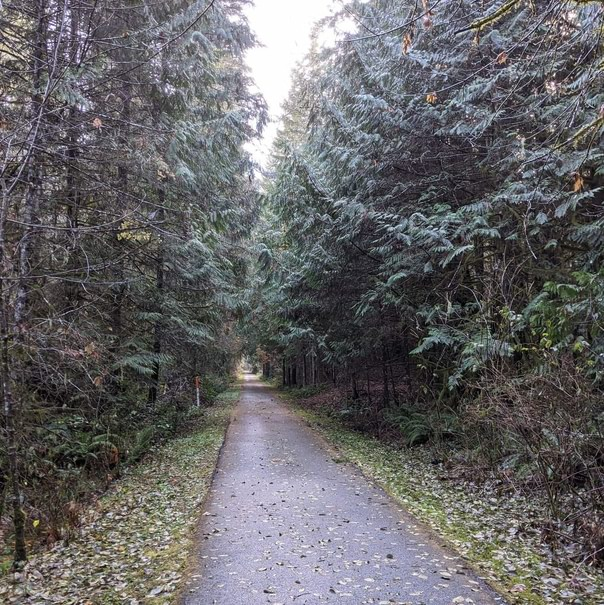 Banks-Vernonia Trail forest columbia county oregon