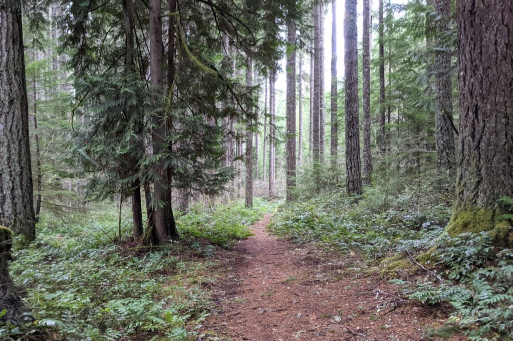 Camp Wilkerson Liahona Loop trail Columbia County Oregon