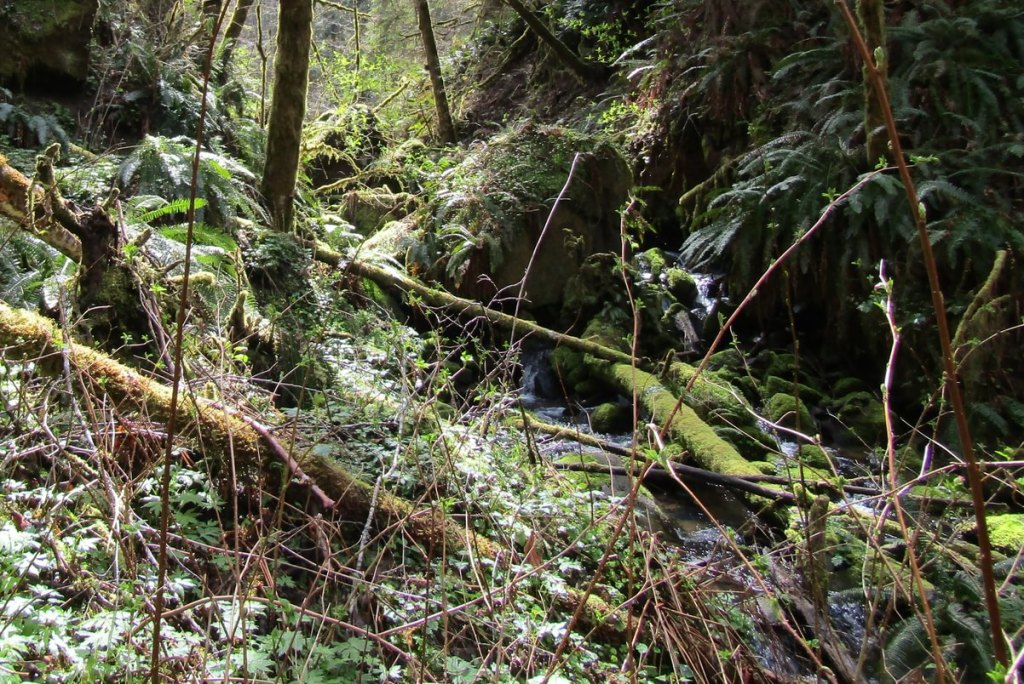 torrent Nehalem Divide Columbia County Oregon crown z CZ Trail