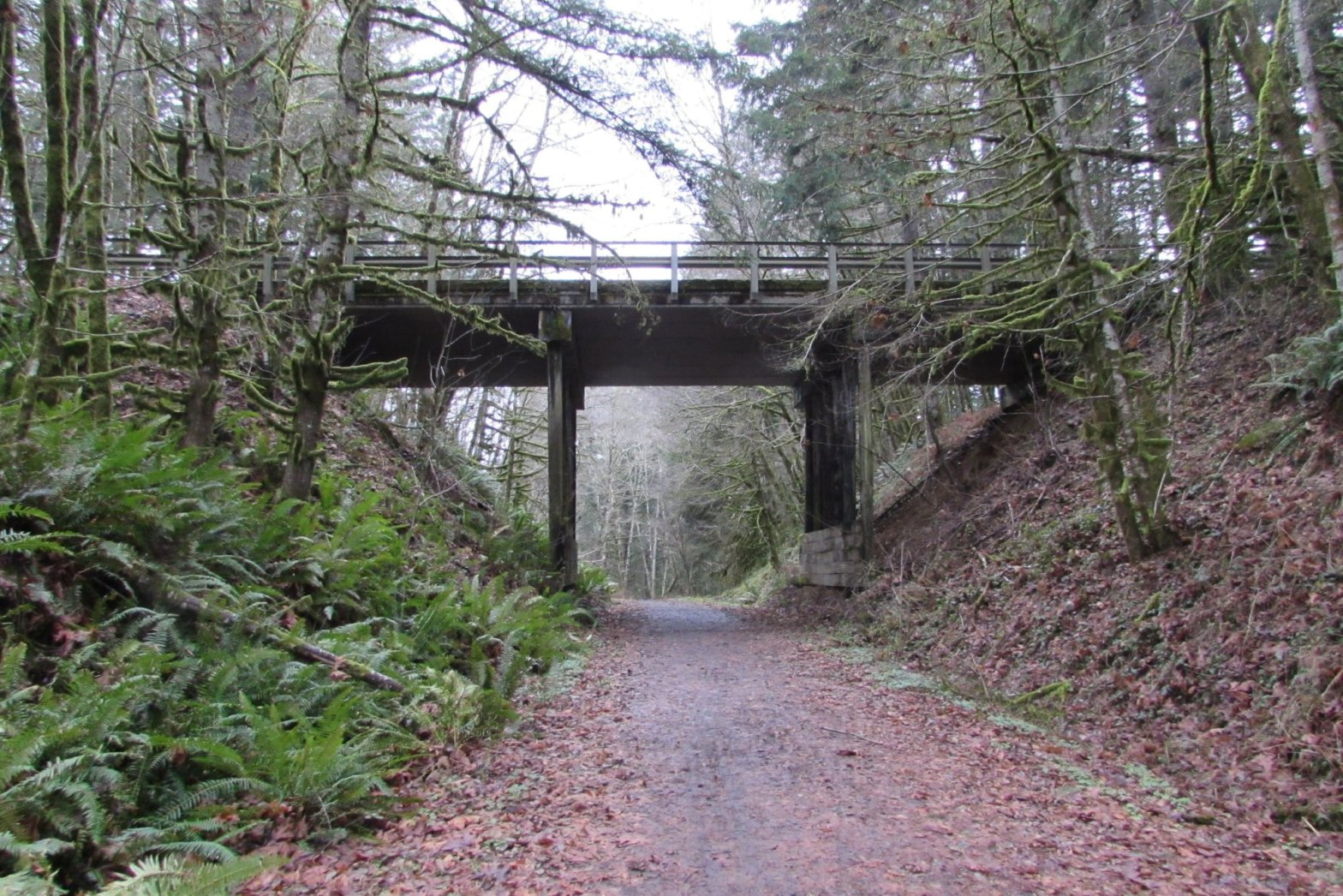 trestle Nehalem Divide Columbia County Oregon crown z CZ Trail