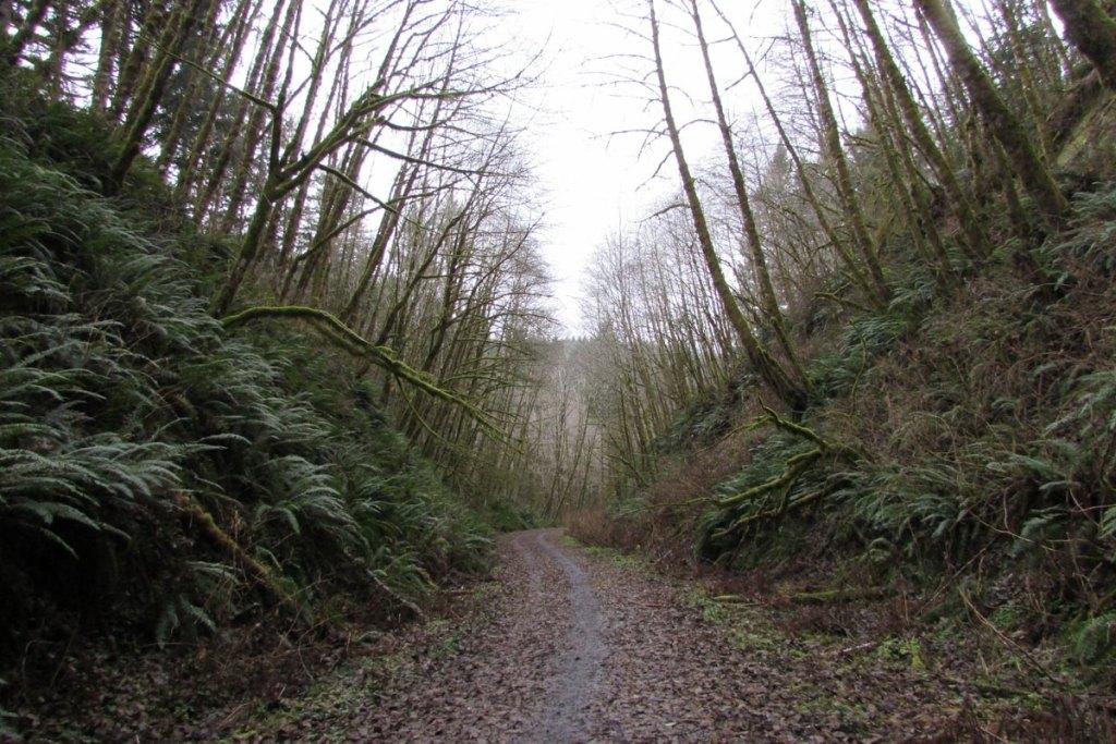 Nehalem Divide trailhead Crown Z trail CZ Columbia County Oregon
