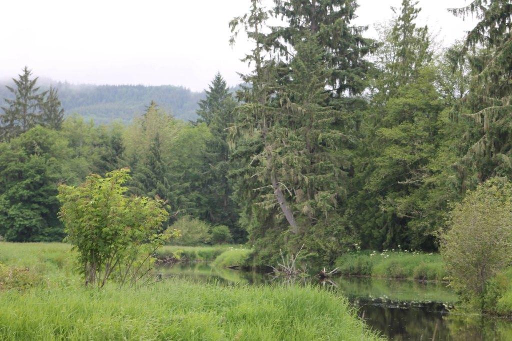 Julia Butler Hansen Refuge Columbian White-tailed Deer Westport area Columbia County Oregon