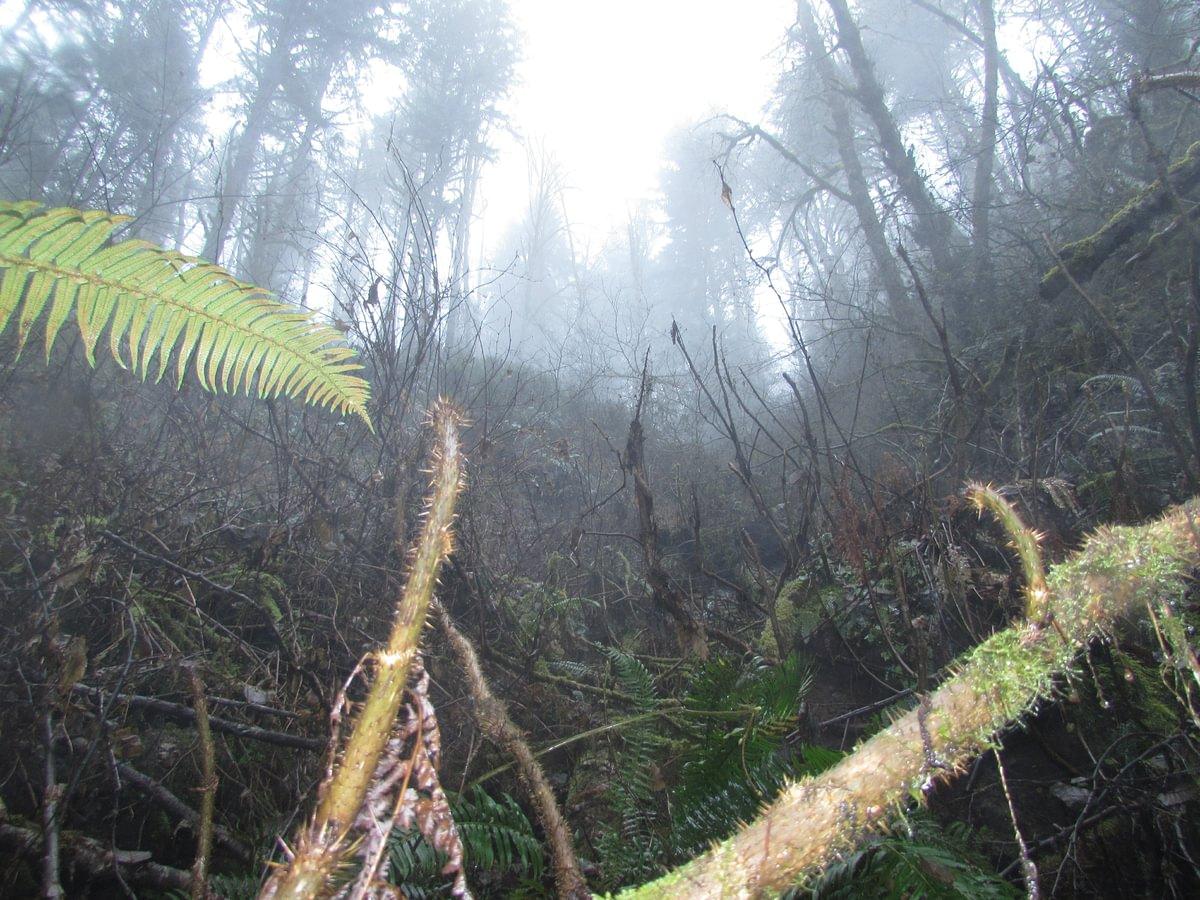 Nehalem Divide CZ Trail torrent salamander habitat