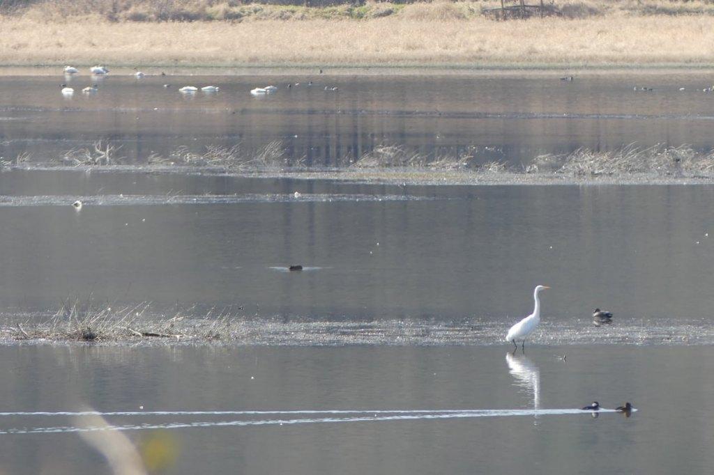 Carr Slough Prescott Beach County Park Columbia River Rainier columbia county