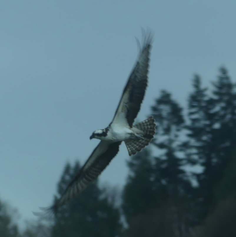 Osprey Trojan Park Goble Prescott Rainier Columbia County oregon