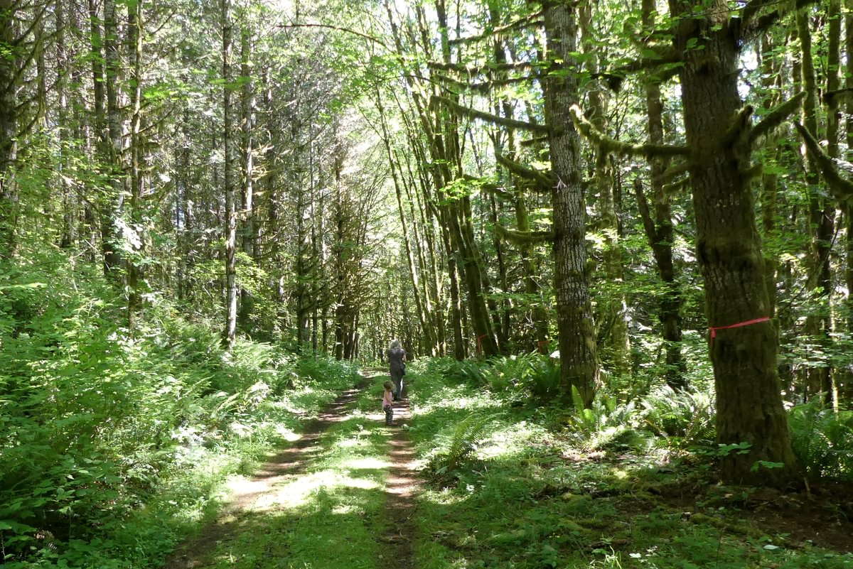 st. helens tree farm salmonberry reservoir young forest columbia county