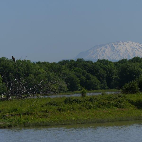 Sauvie Island Mt. St. Helens Bald Eagle Wildlife Area Westside Unit Columbia County Oregon