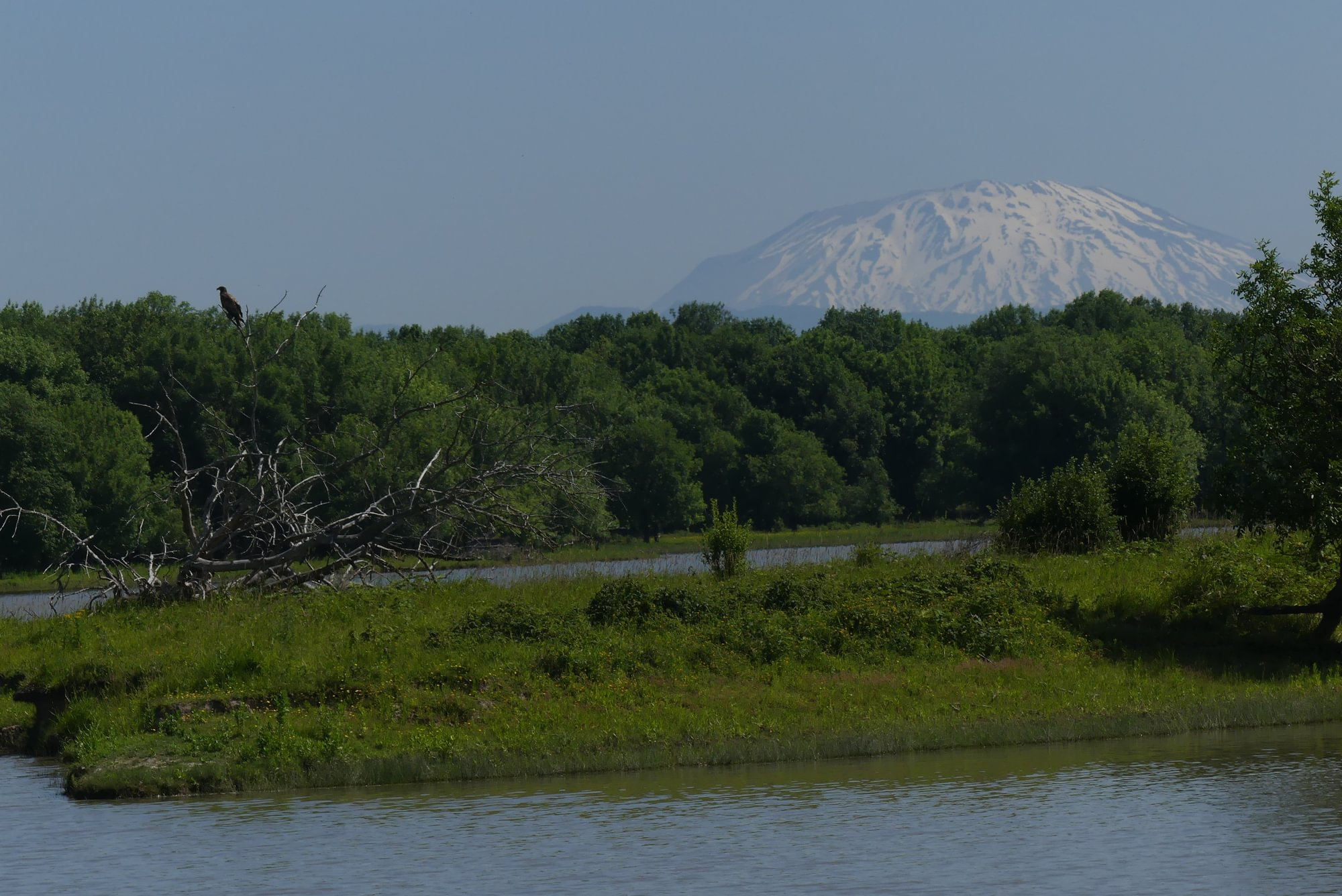 Mud Lake Bald Eagle Mt. St. Helens Sauvie Island Westside Unit Columbia County Oregon