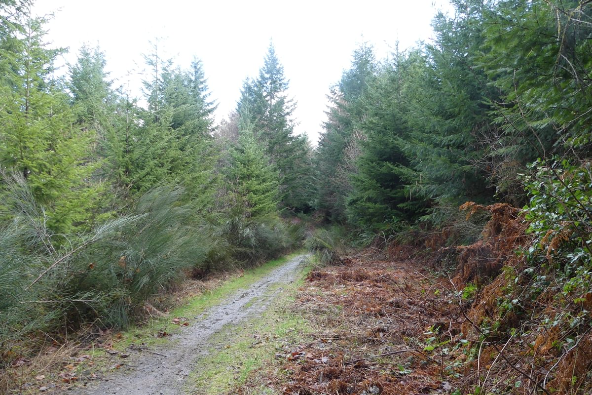 st. helens tree farm salmonberry reservoir reprod reproduction columbia county