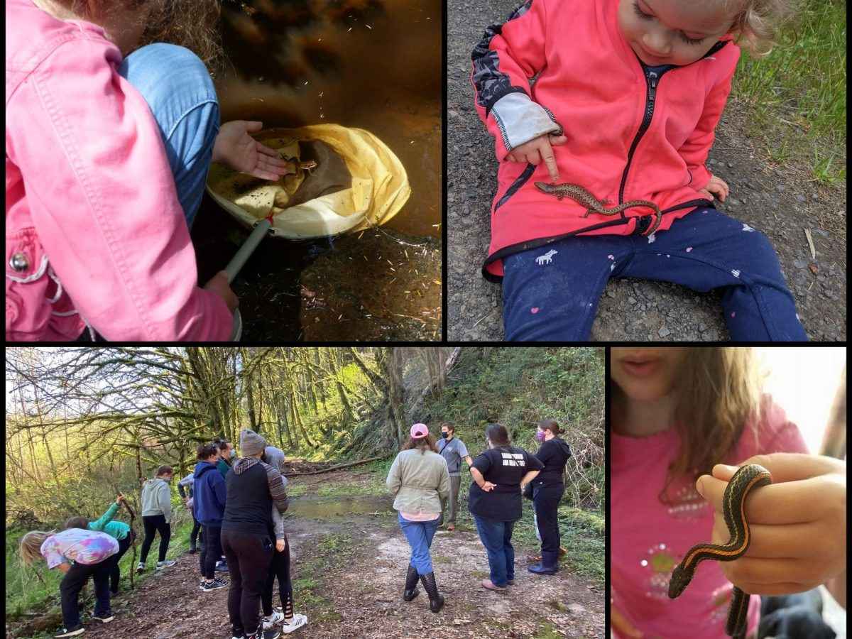 kids herping in columbia county oregon reptiles and amphibians
