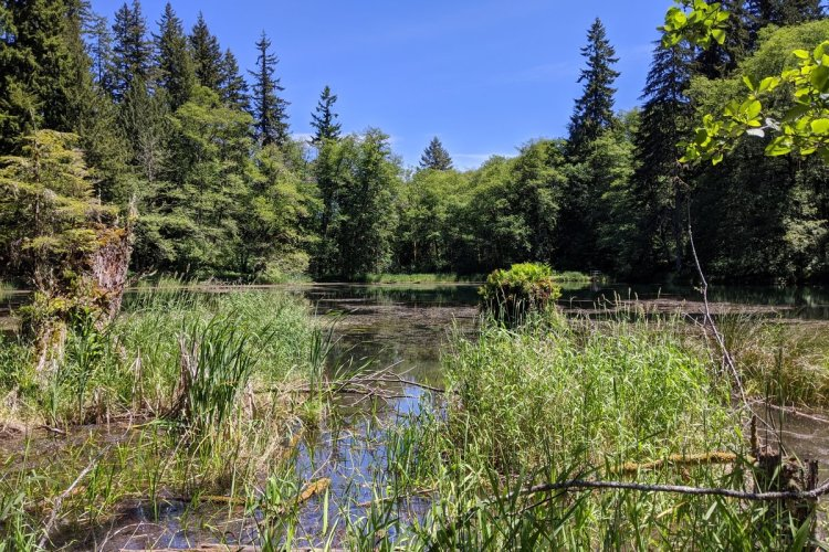 scout lake clatskanie oregon columbia county