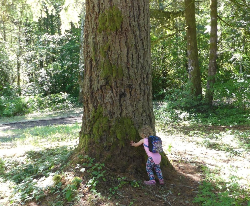mature tree Salmonberry Reservoir St. Helens Tree Farm Columbia County Oregon lake