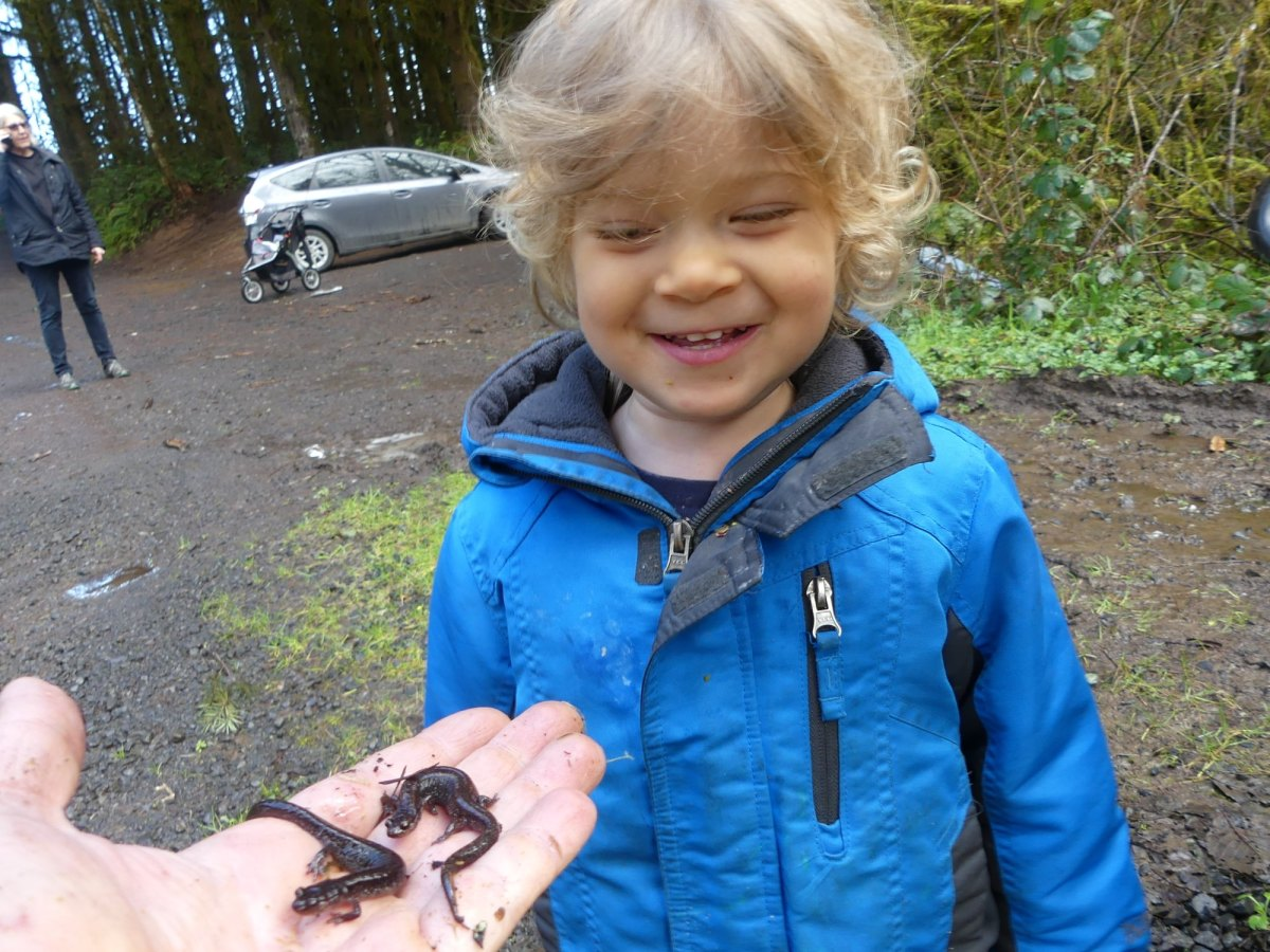 Dunn's Salamanders Salmonberry Reservoir St. Helens Tree Farm Columbia County Oregon