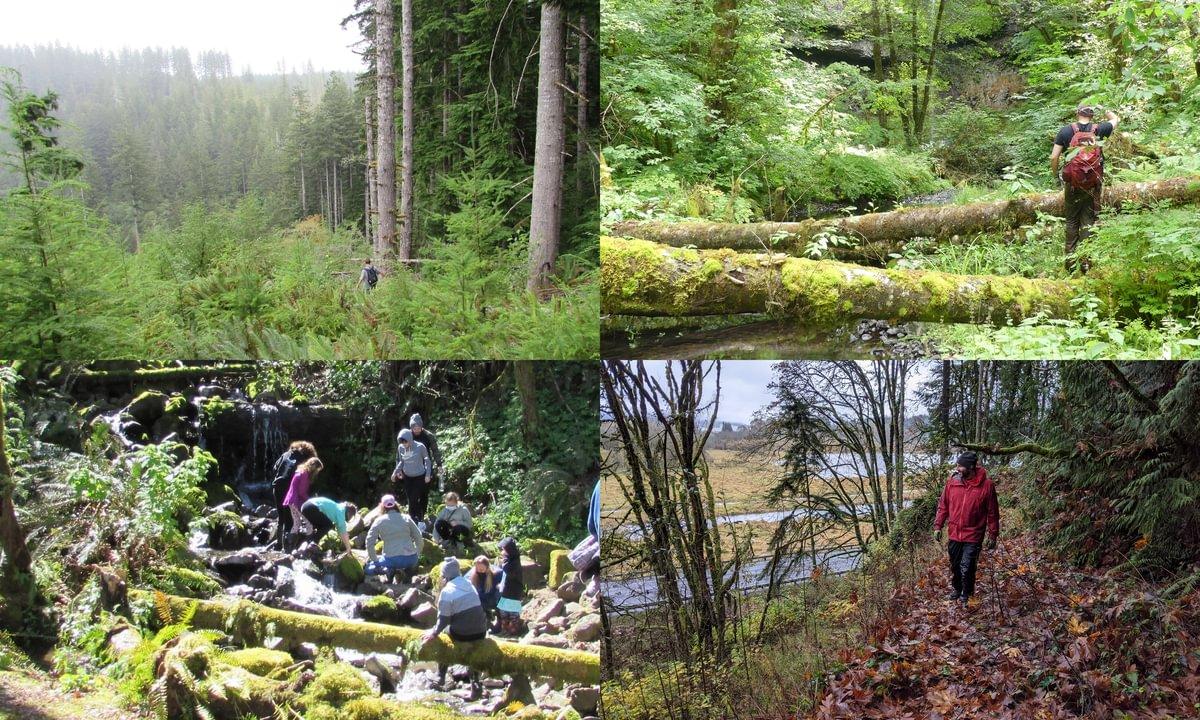 Columbia County Reptiles and Amphibians surveys jon hakim matt d'agrosa