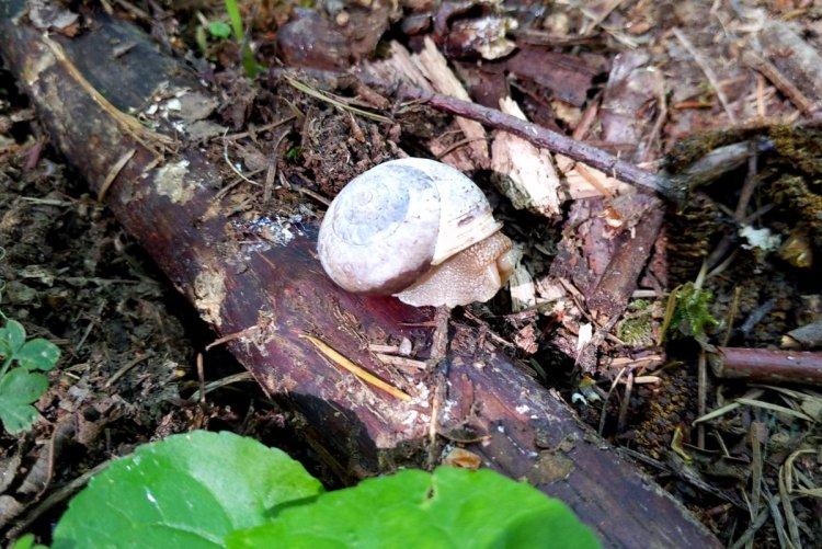 Oregon Forestsnail Wilark Pioneer Cemetery Columbia County Oregon