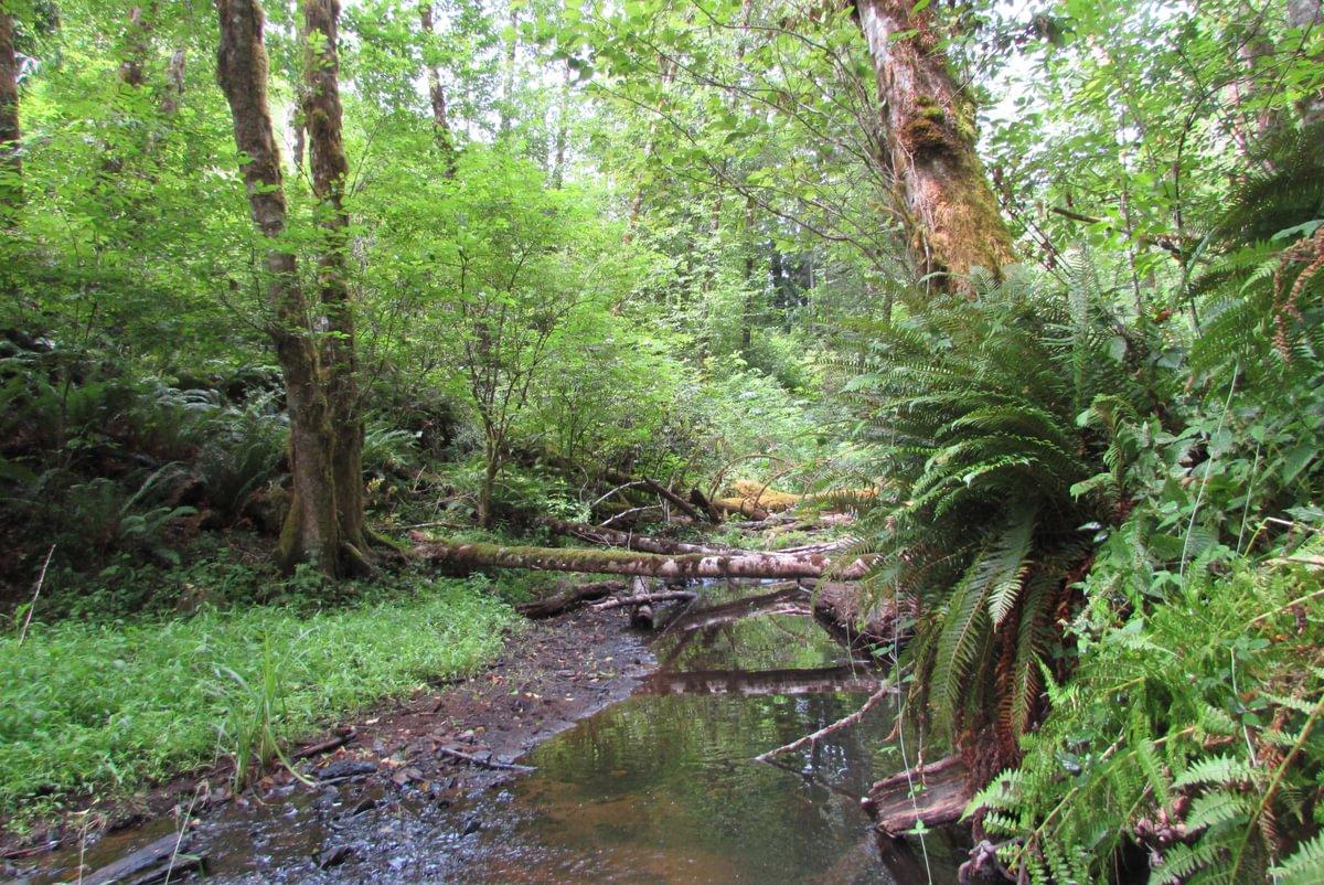Carcus Creek near waterfall