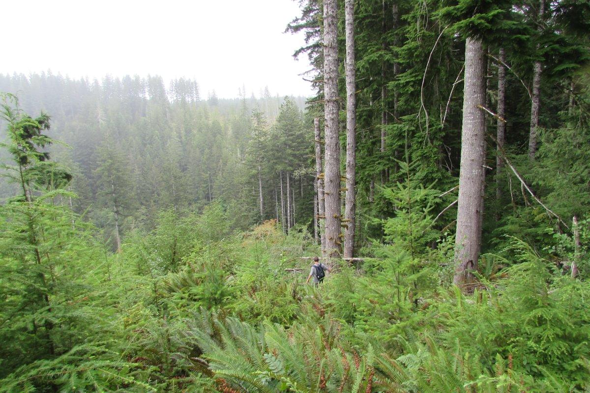 descent into Carcus Creek Falls columbia county oregon