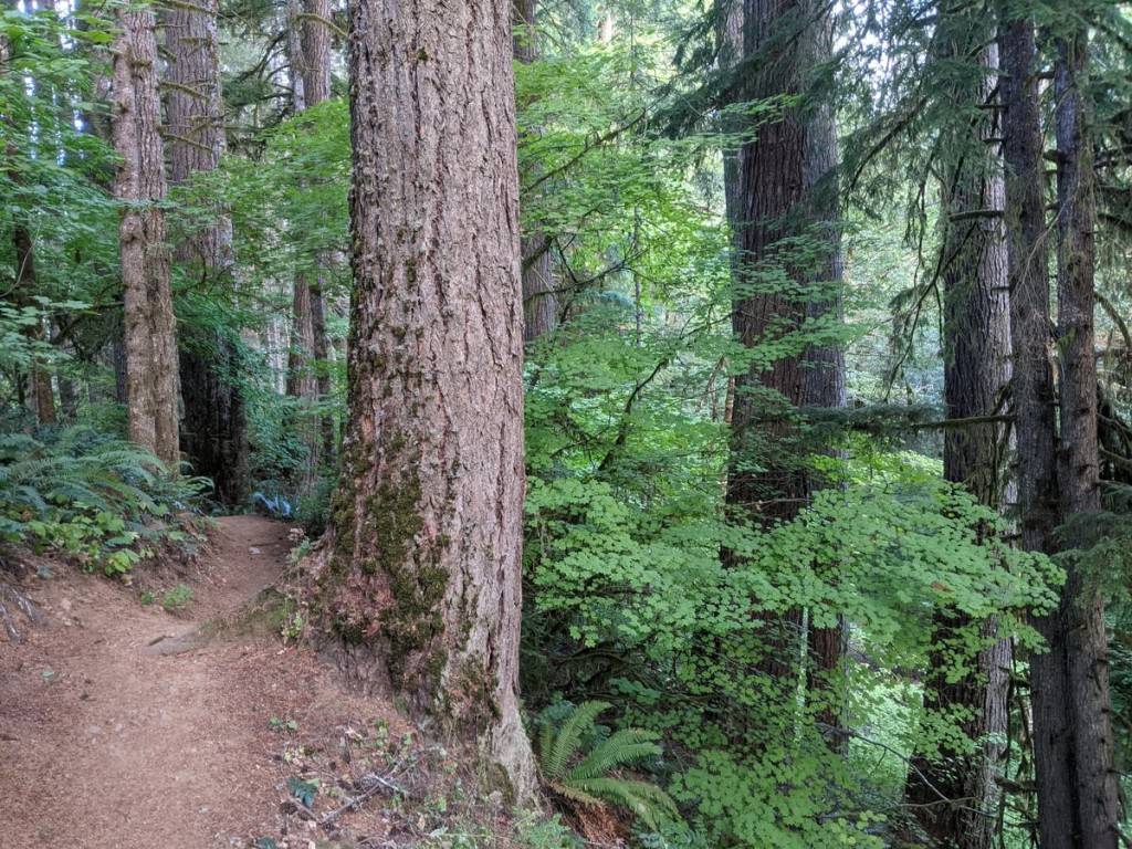 Four County Point Trail Tillamook State Forest Columbia County Oregon